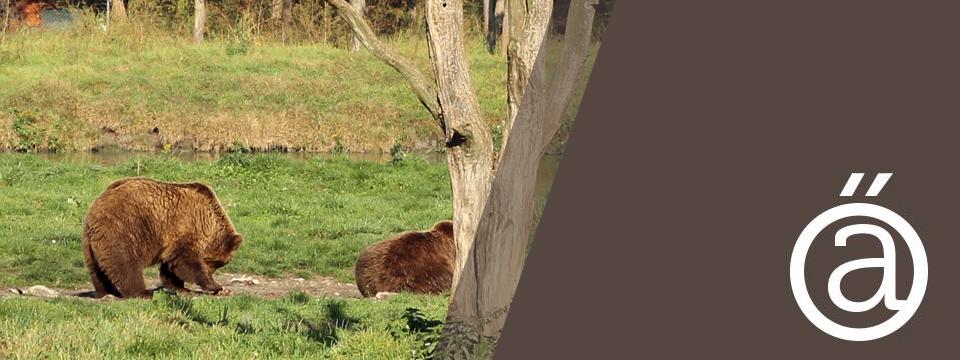 Késő őszi kirándulás a Medvefarmra