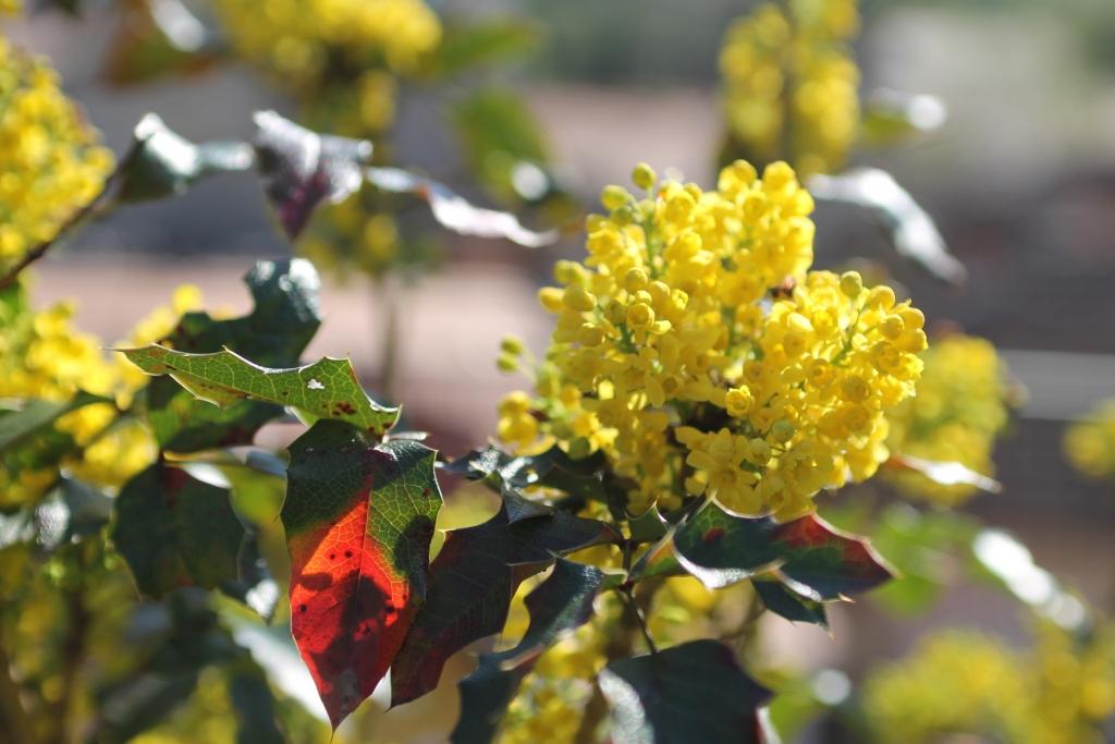 Fotóblog virágokkal