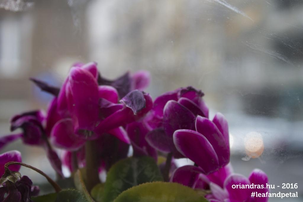 Tél a Lágymányosi utcában, fotó: Őri András