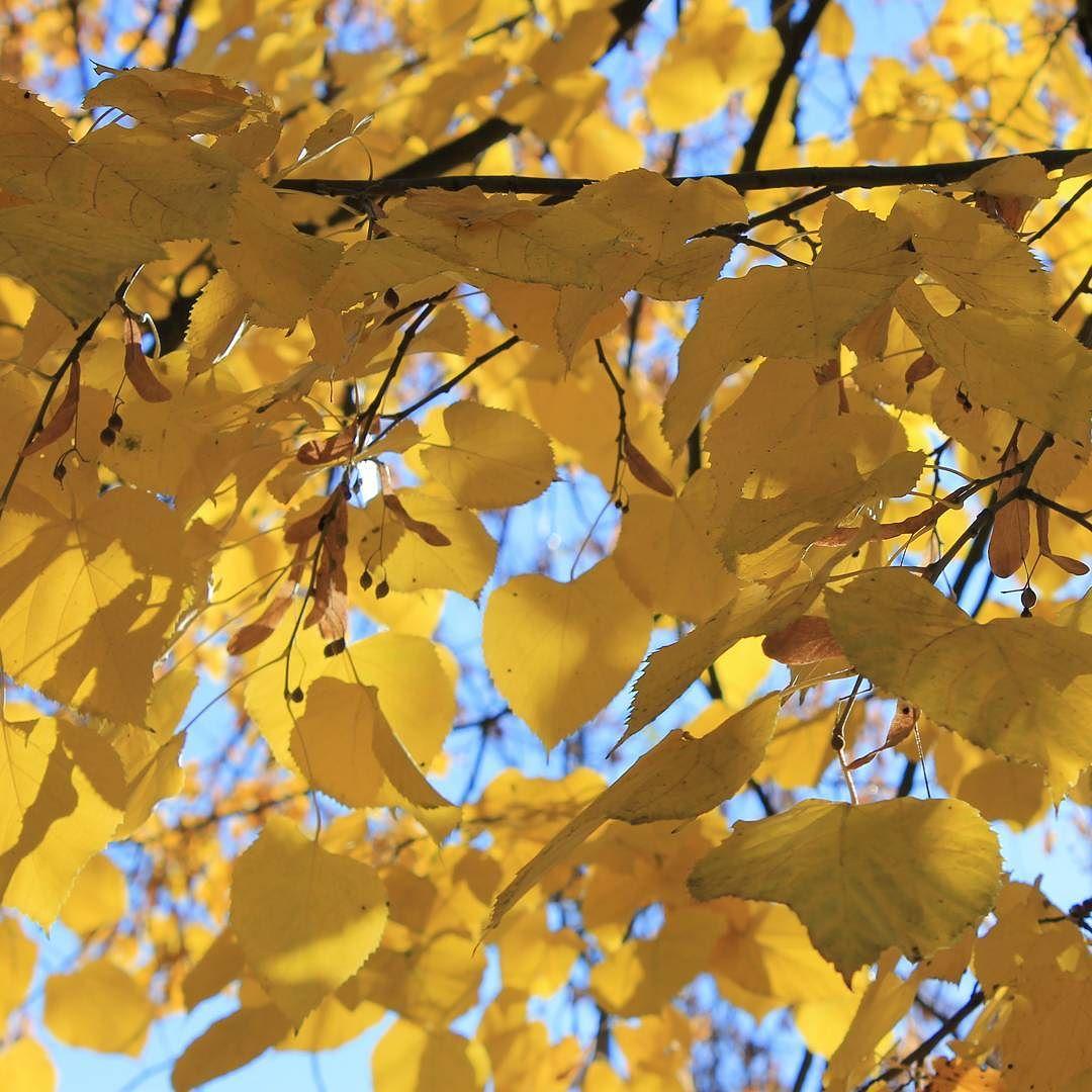 Ma váratlanul egy gyönyörű őszi napot kaptunk