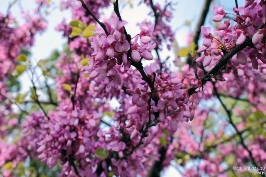 Már megint a harsány #tavasz!