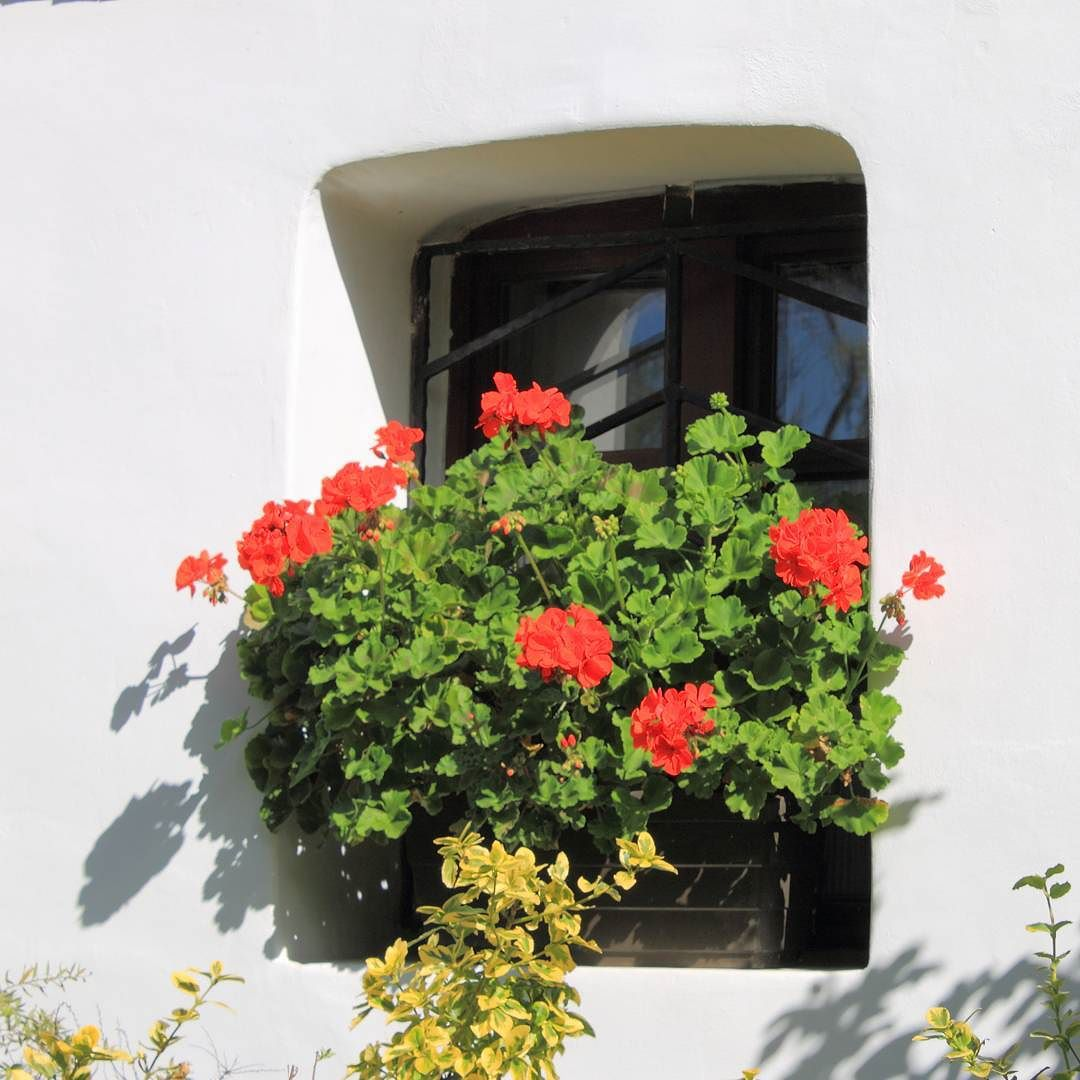 Sukorói nádfedeles ház ablaka